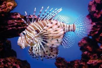 Entre peces león, palomillas del nopal y demás especies invasoras