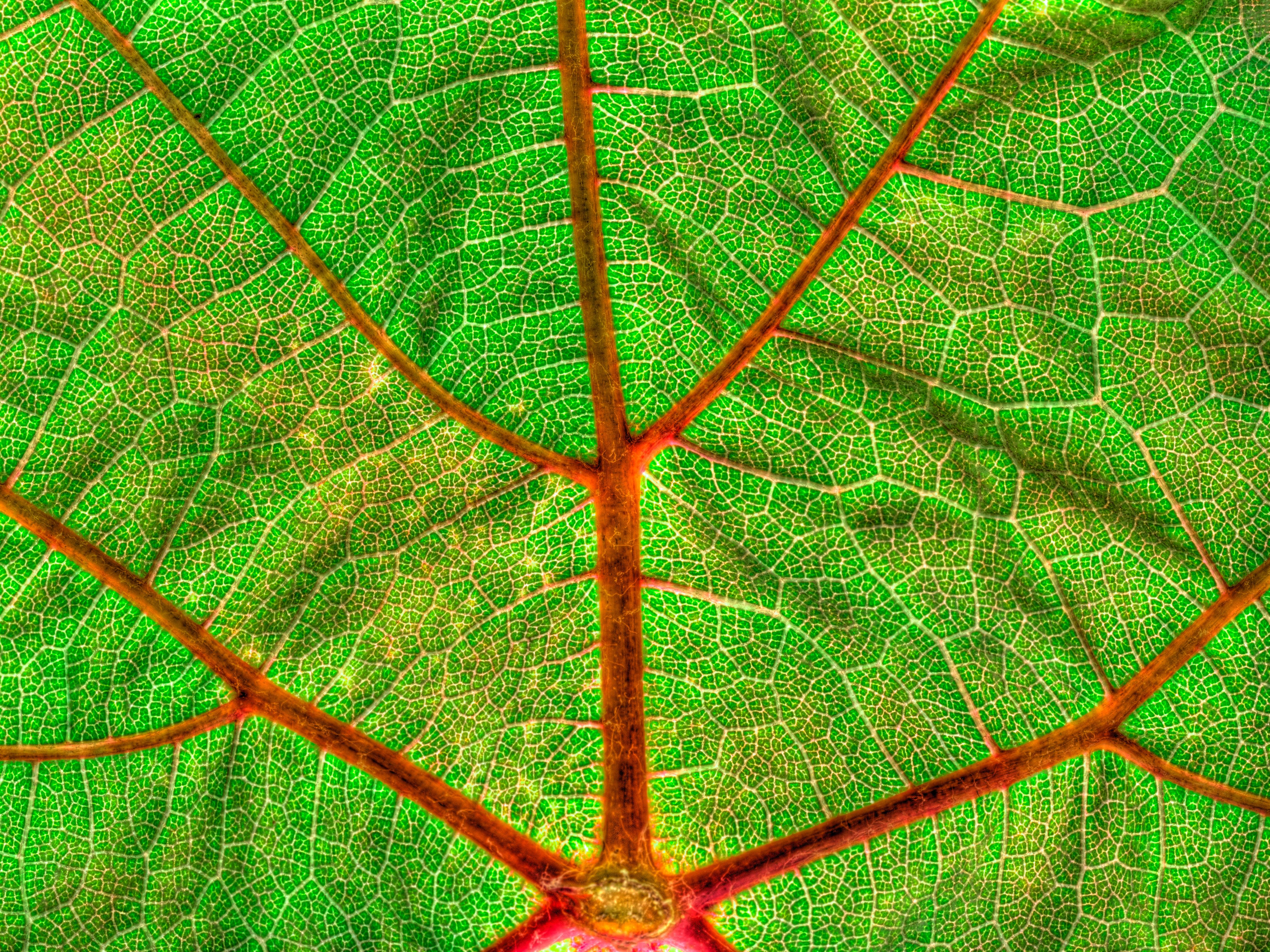 Confesiones de un voyeur vegetal