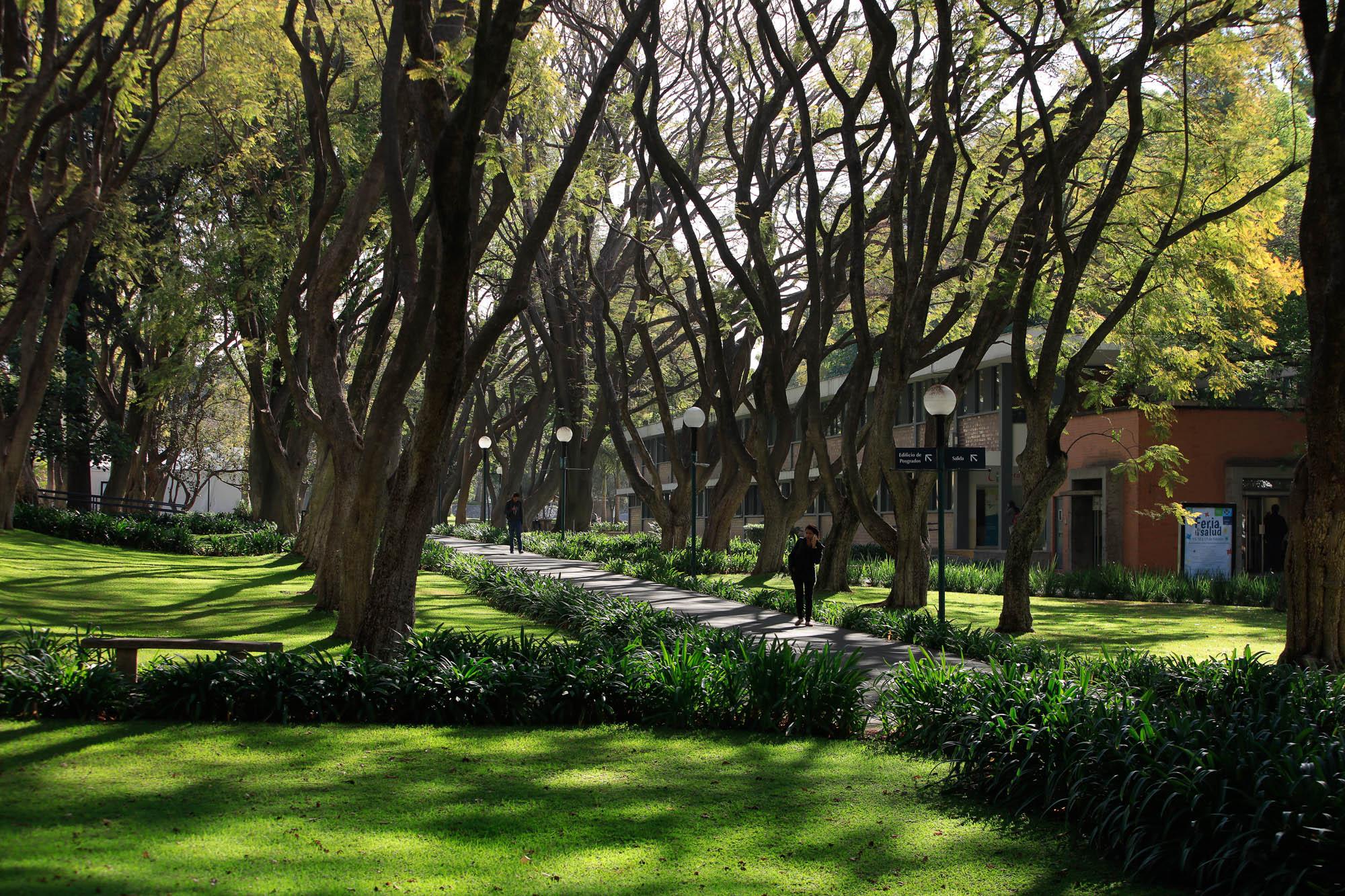 El campus, aprendizaje al interior de un bosque