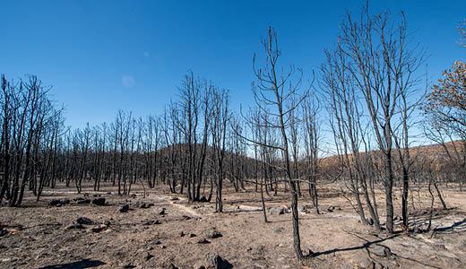 Cambio de uso de suelo, el peor enemigo del bosque