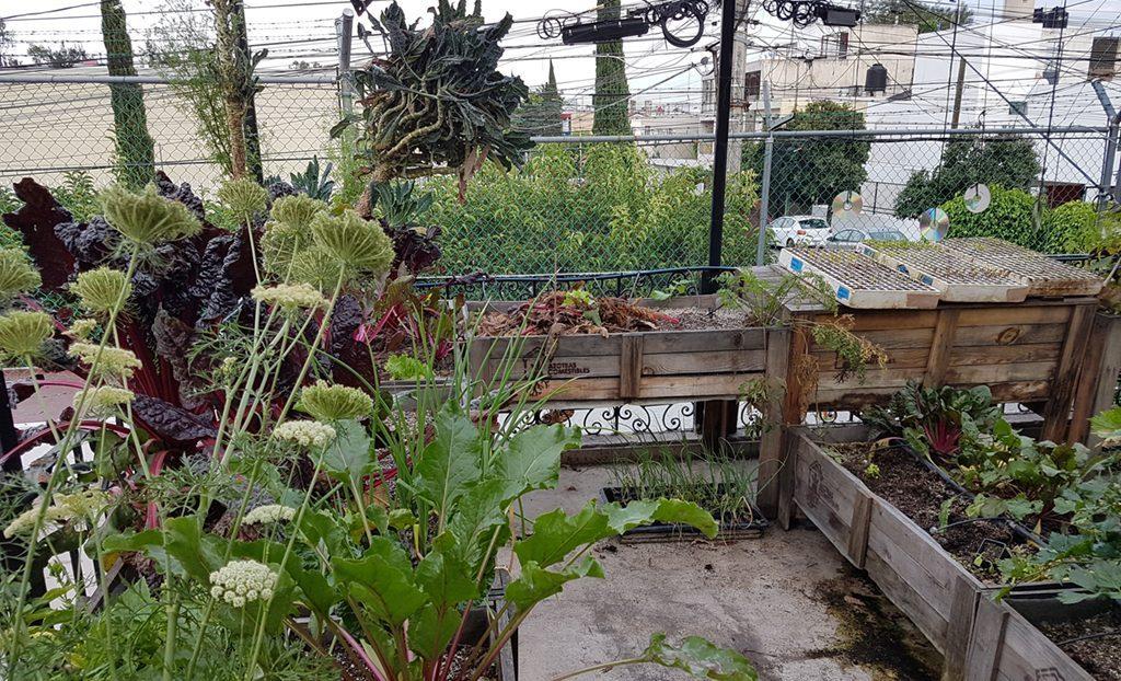Soberanía alimentaria: una alternativa para la nueva normalidad